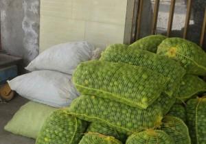 افزایش واردات ارزان قیمت لیمو از طریق مبادی غیرقانونی / واردات لیموترش بی کیفیت خسارت جبران ناپذیری دارد
