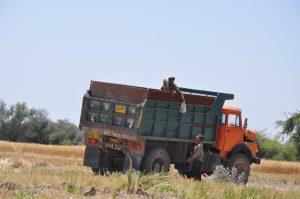 آغاز فصل برداشت گندم از مزارع بخش رودخانه رودان +تصویر