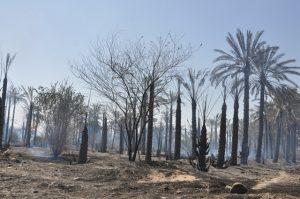 نابودی بیش از ۶۰ هکتار و خسارت ۳۰ میلیارد ریالی به مرکبات رودان در اثر آتش سوزی +تصویر