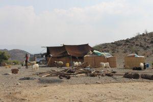 آغاز ورود عشایردامدار به شهرستان رودان +تصویر