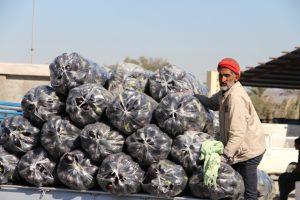 سود حاصل ازکار و تلاش یکساله کشاورزان رودانی درجیب دلالان +تصویر