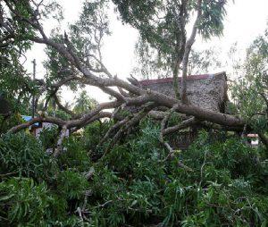 خسارت ۱۵میلیارد و۹۰۰هزار تومانی طوفان اخیر به باغات مرکبات رودان