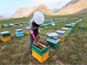 ورود زنبورستان های مهاجر به شهرستان رودان آغاز شد