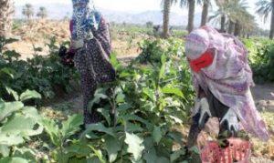 بهشت هرمزگان منطقه ای بکر برای تولید انواع میوه و صیفی جات/ ارز آوری ۹۲ میلیون دلاری محصولات کشاورزی رودان