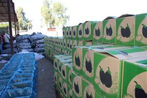 سناریوی تکراری افت قیمت بادمجان در فصل برداشت/ فرماندار رودان: دور ریختن محصول بادمجان توسط کشاورزان صحت ندارد