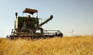 افزایش ۲برابری برداشت گندم در رودان / نگرانی کشاورزان از کمبود کود شیمیایی است