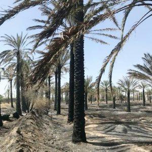 خسارت ۱۲۰ میلیارد ریالی آتش سوزی به بخش کشاورزی شهرستان رودان