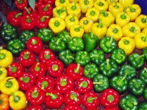 آغاز کشت فلفل رنگی گلخانه ای در رودان/رودان رتبه اول کشت این محصول را در استان دارد