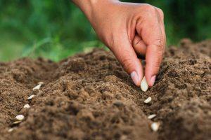تخصیص ۵۰ هکتار زمین جدید برای تاسیس گلخانه و تولید بذر هیبریدی در رودان