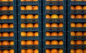 ذخیره سازی بیش از ۷۰۰ تن پرتقال شب عید در رودان